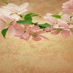 Harazaki Wallpaper Motif Nature I021b