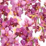 Wallpaper Murah Motif Floral AL-D-054