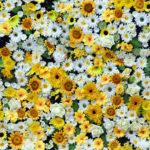 Wallpaper Murah Motif Floral AL-D-063